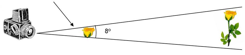 angulo 8